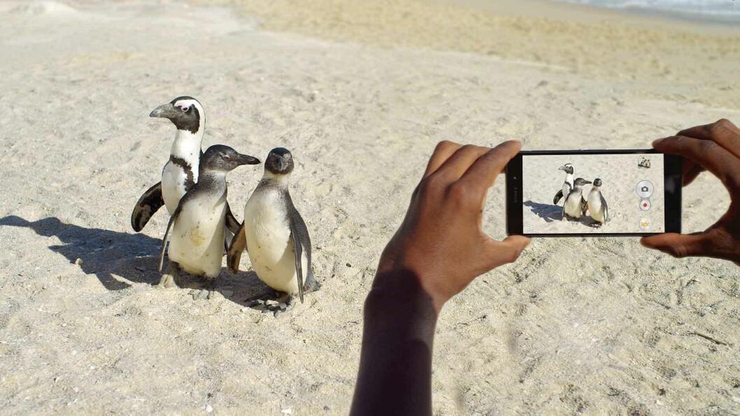 Nå blir ikke bildene vi tar bare liggende på mobilen, stadig flere nordmenn velger å skrive ut mobilbildene sine. Foto: Sony Mobile