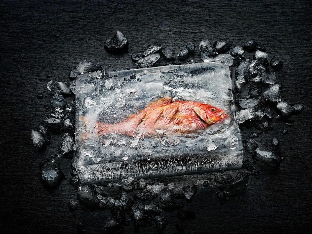 Miele viser gjerne hvordan deres dialogovn, som benytter elektromagnetiske bølger, er i stand til å steke en fisk i en isblokk, uten at isen smelter. Foto: Miele.